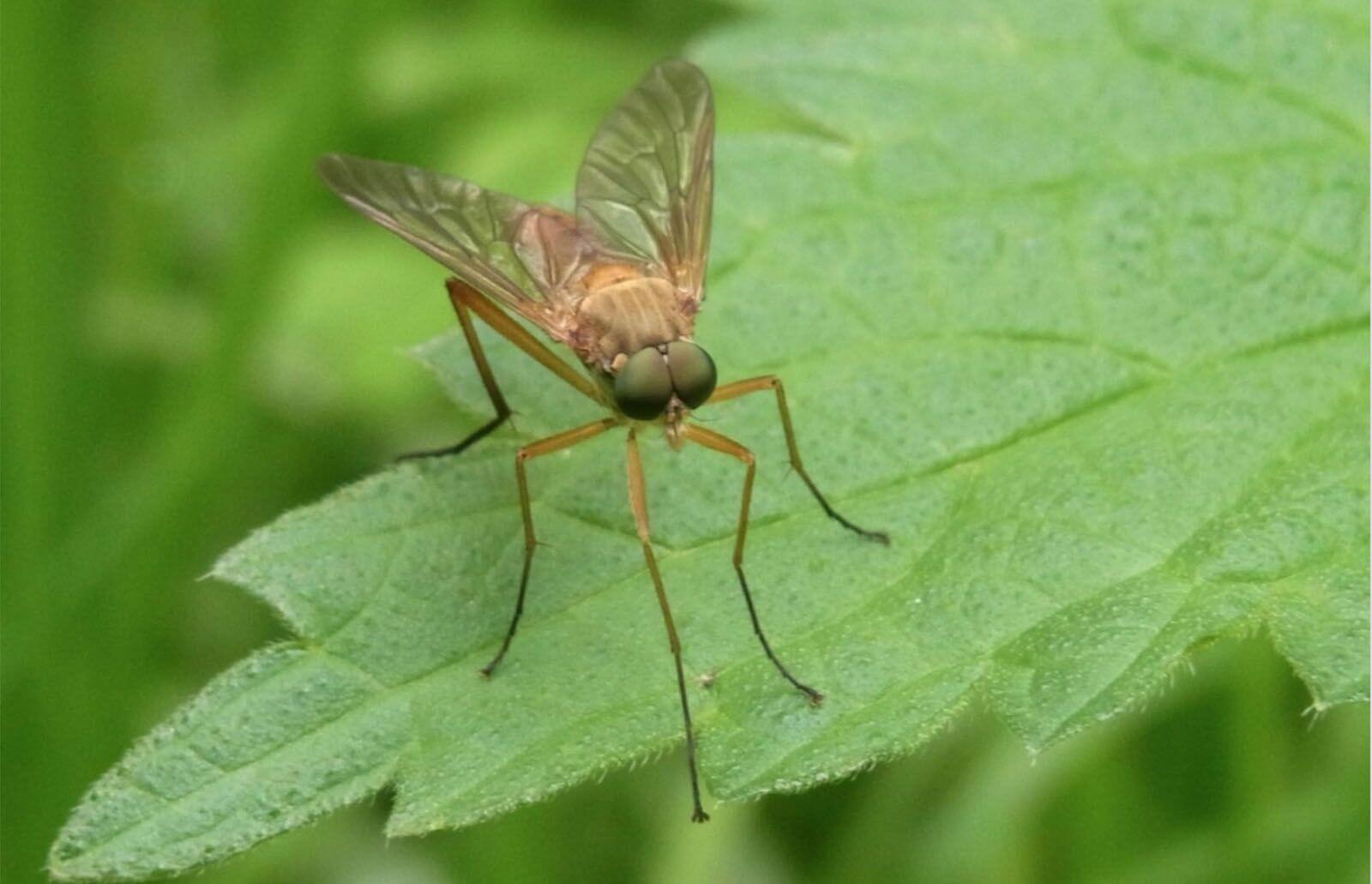 Spilletip til Jeg har fanget mig en myg